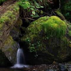 Merriman Falls Mosses