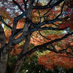 Autumn on Peachtree