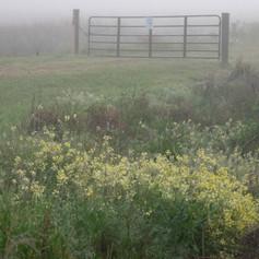 Wildflowers in Fog