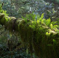 Ferns on Log
