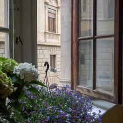 Florence Window