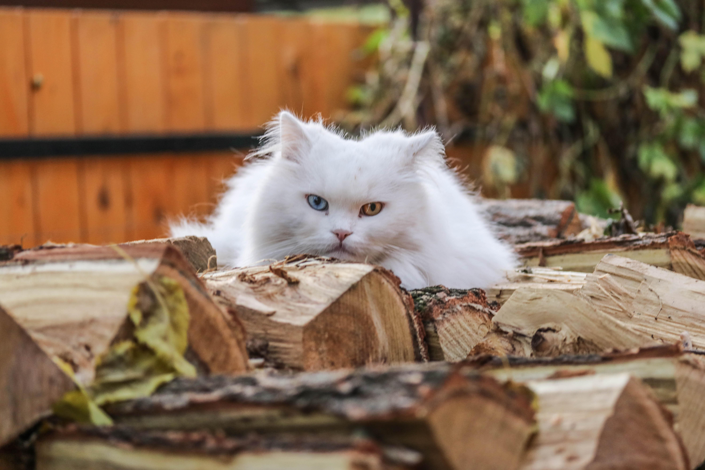 Cica-kutya fotózás