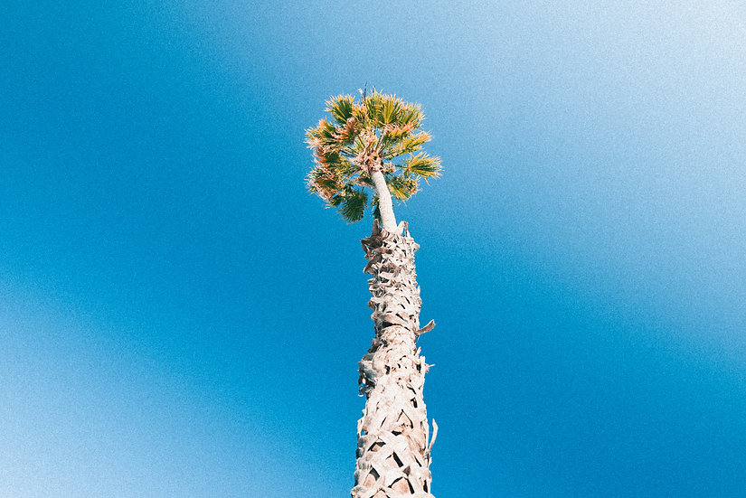 "SANTA BARBARA SERIES // ""PALM TREE"" Print"