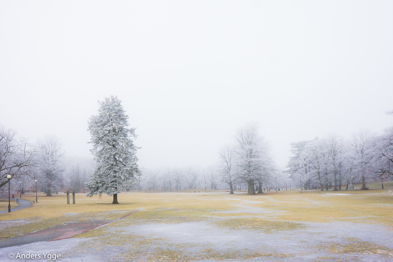 Slottskogen, Björngårdsvillan