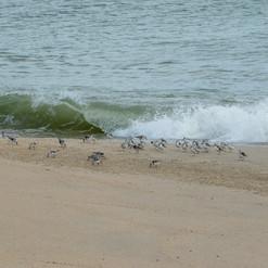 Nantucket 12.jpg