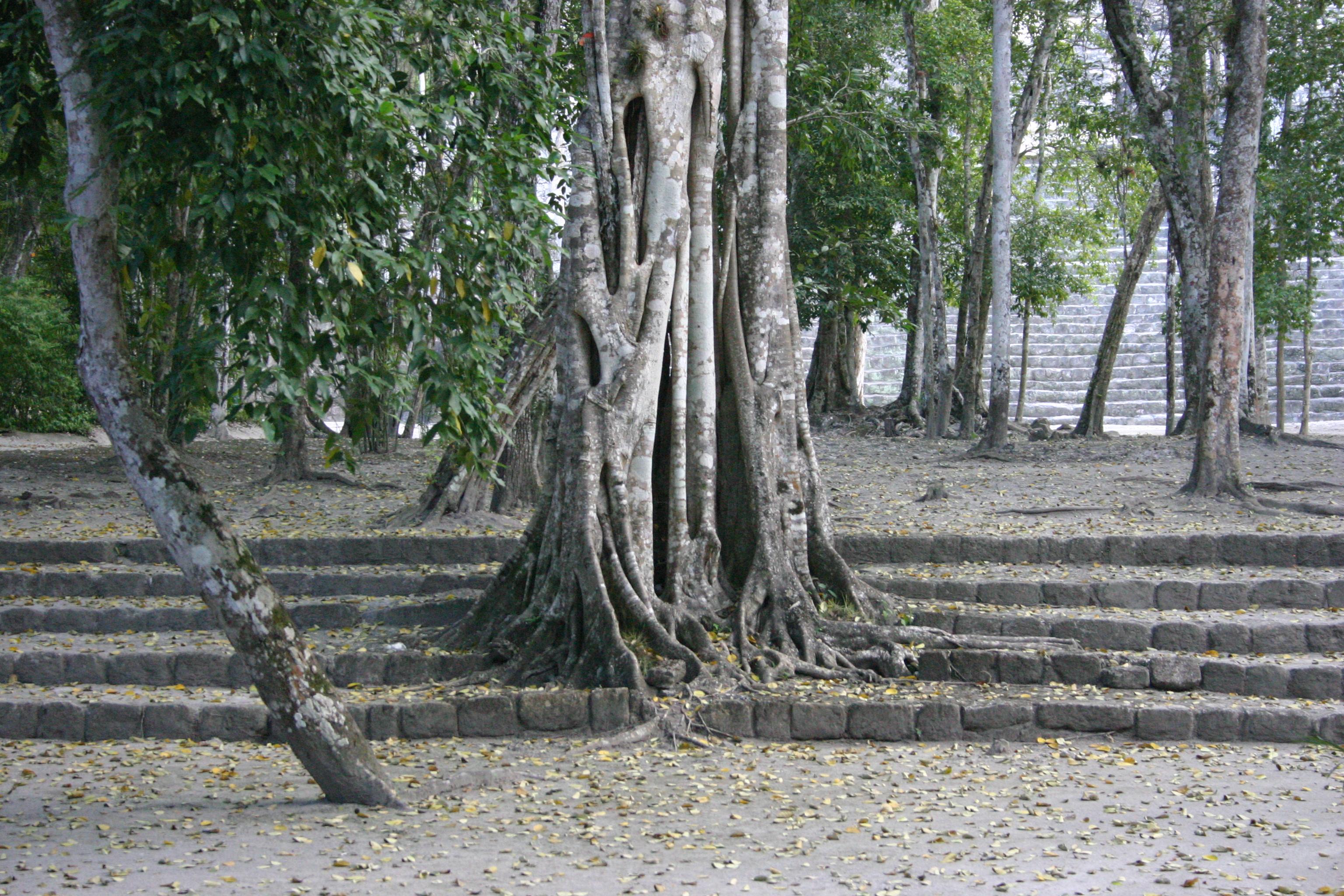 Os jardins da Amazônia