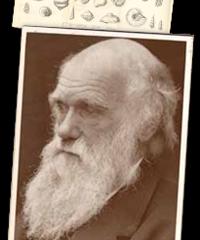 Darwin online!