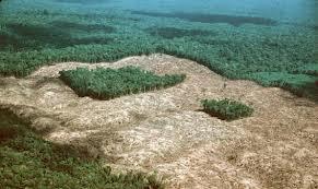 Mitos e fatos da fragmentação de hábitats