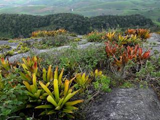 Destruindo a legislação ambiental na Dudulândia