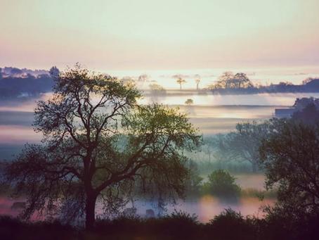 Early Morning Wakes