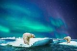 polar-bear-3065359.jpg