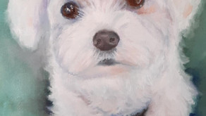 How to paint a white dog when white is not a color!