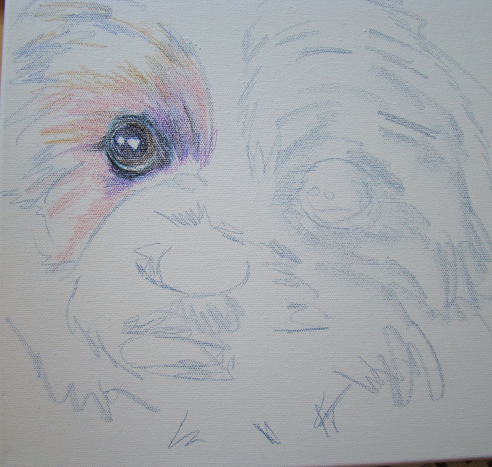 Gretal has begun.  I start with a colored pencil drawing on canvas.  Start connecting with the eyes.  Look closely at the color and lighting.  Then work around the eyes to sketch the rest of the face.