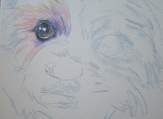 Painting your pet, step by step