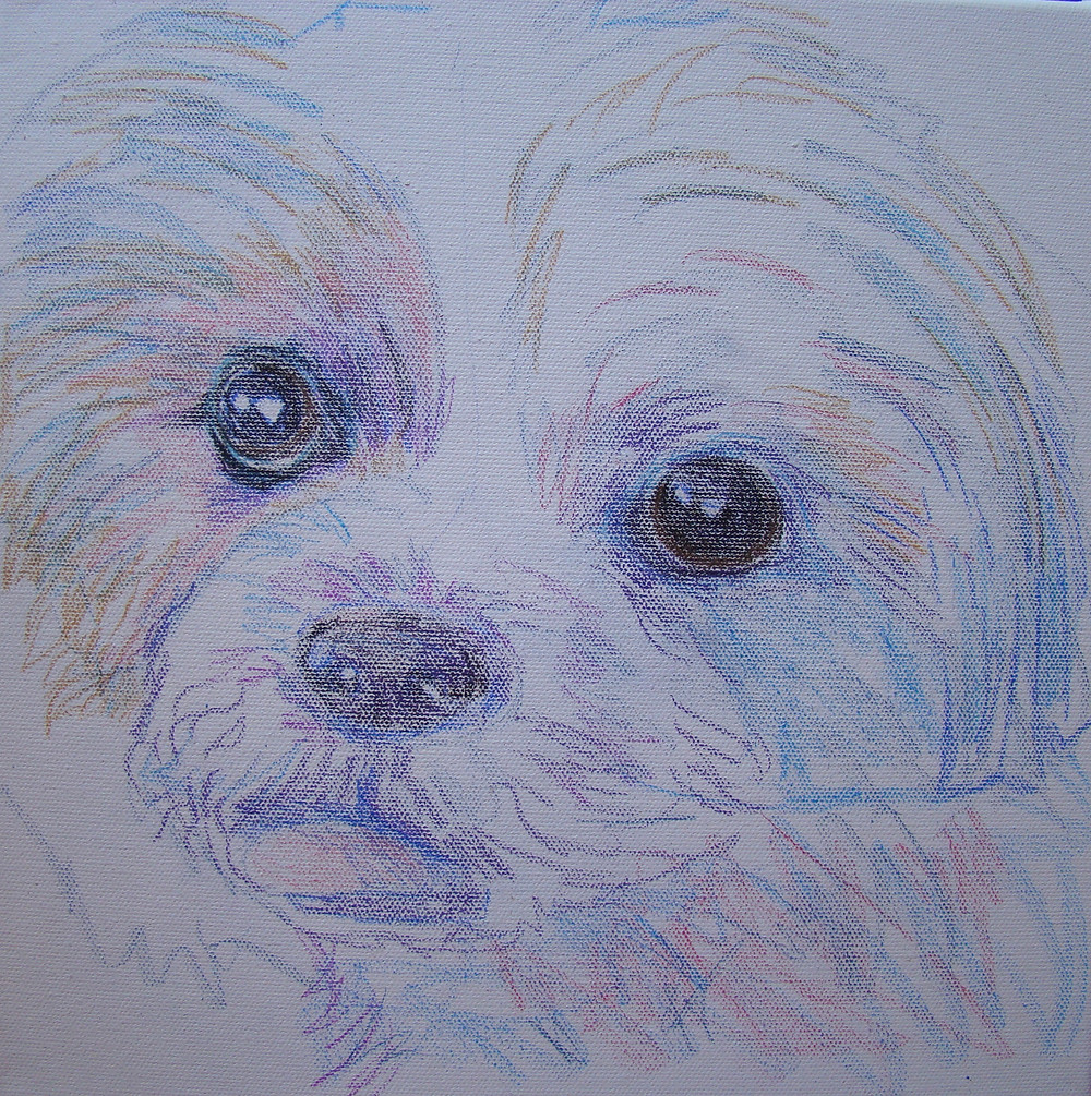 When starting your pet portrait (and for anyone interested in learning my process), I begin with a colored sketch.  Graphite pencils tend to smear, and I like having a starting point in color.  I begin with a very rough sketch, and then start concentrating on the eyes.  Give them life by allowing the white specs to stay.  Look closely at their coloring.  The pupil is the darkest - start there.    Once I have a decent starting point, I'll continue to adjust and add color, value, shape and shade.  I am now ready to begin applying paint.  Hope this was helpful.