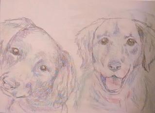 Painting a pet portrait