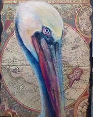 worldly pelican