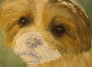 Painting a pet portrait, step by step