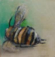 Plight of the Honey Bee