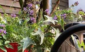 Omi backt! Blumen im Garten