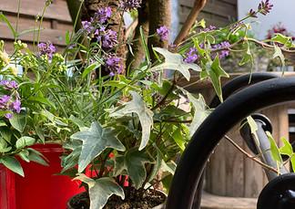 Blumen auf Holzwagen.jpg