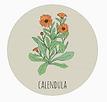 project calendula.PNG