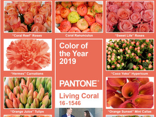2019 Color of the Year!