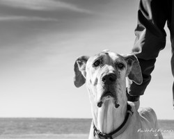 Oklahoma city pet photographer