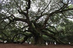 South Carolina, Angel Oak Tree