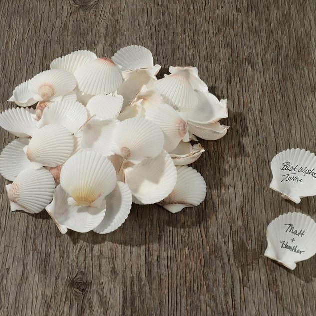 Guest Signing Sea Shells