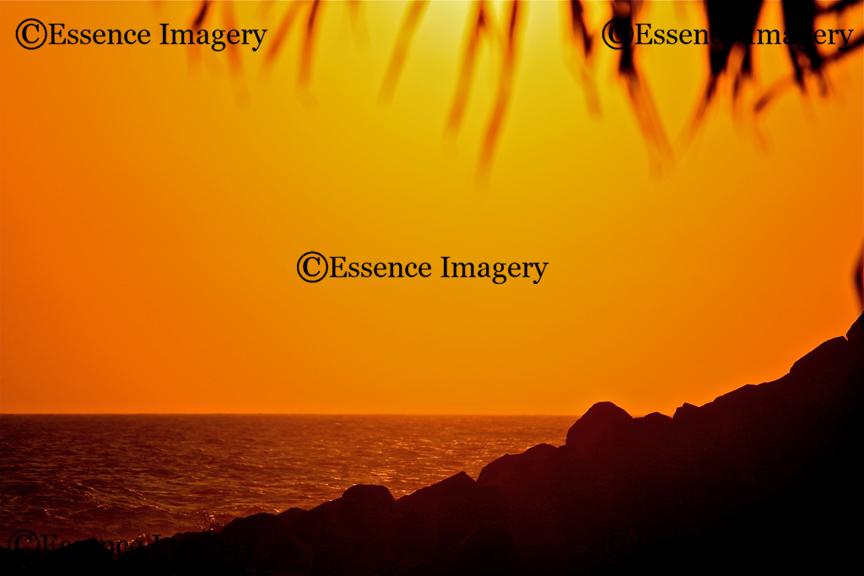 Landscape 46