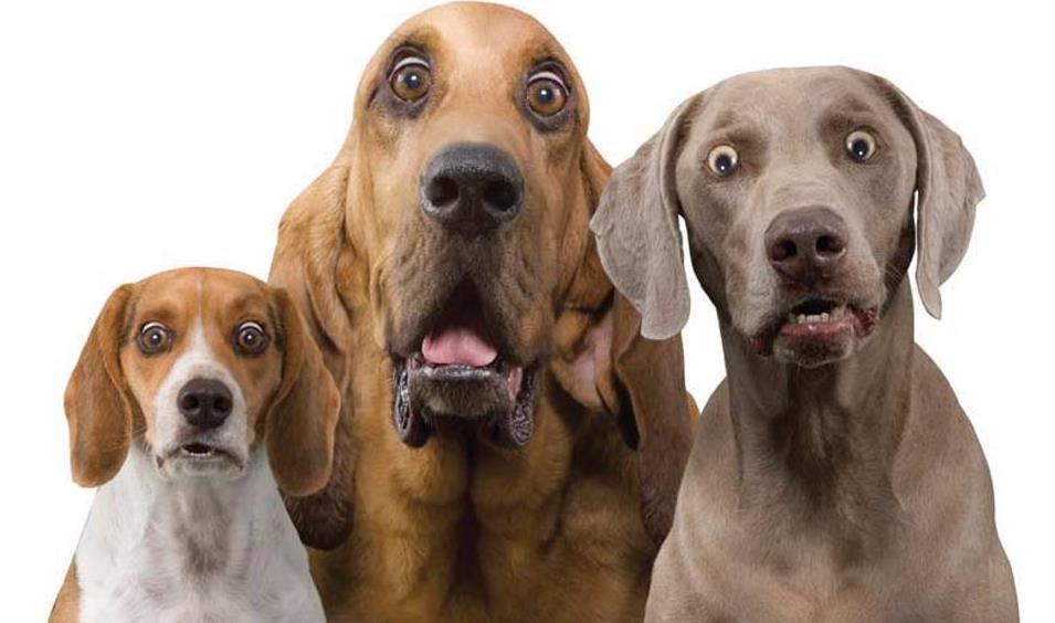 3 DOGS shocked look.jpg