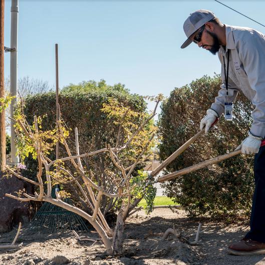 Desert Arc Landscape Maintenance - Client Trimming Bushes