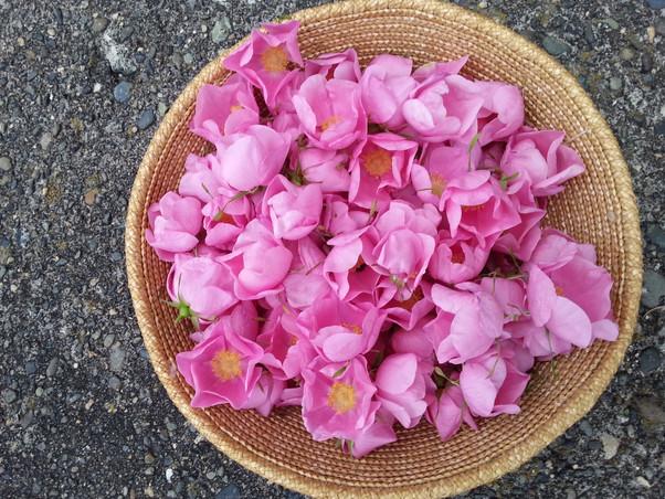 Haida Roses in Basket