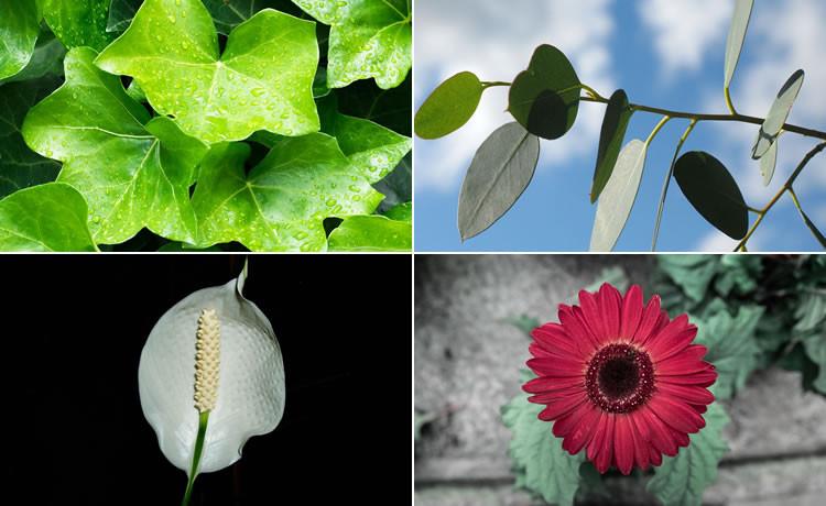 Melhore a qualidade do ar interior com plantas em casa
