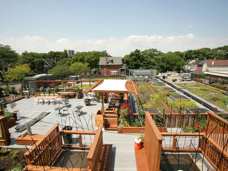 Partnership between East End United Regional Ministry and the Carrot Green Roof