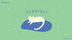 [cat]day5-07