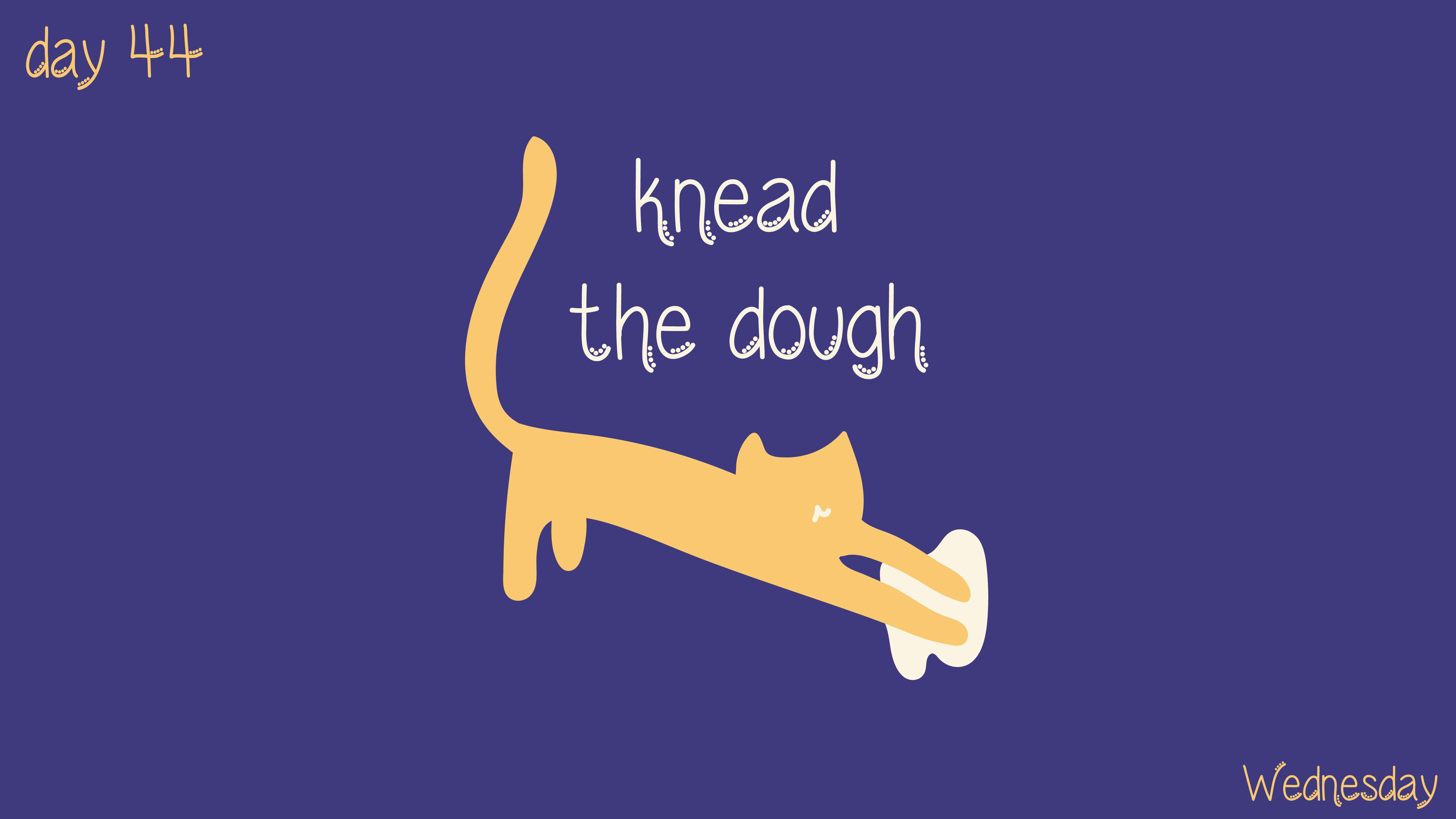 [cat]day4-04