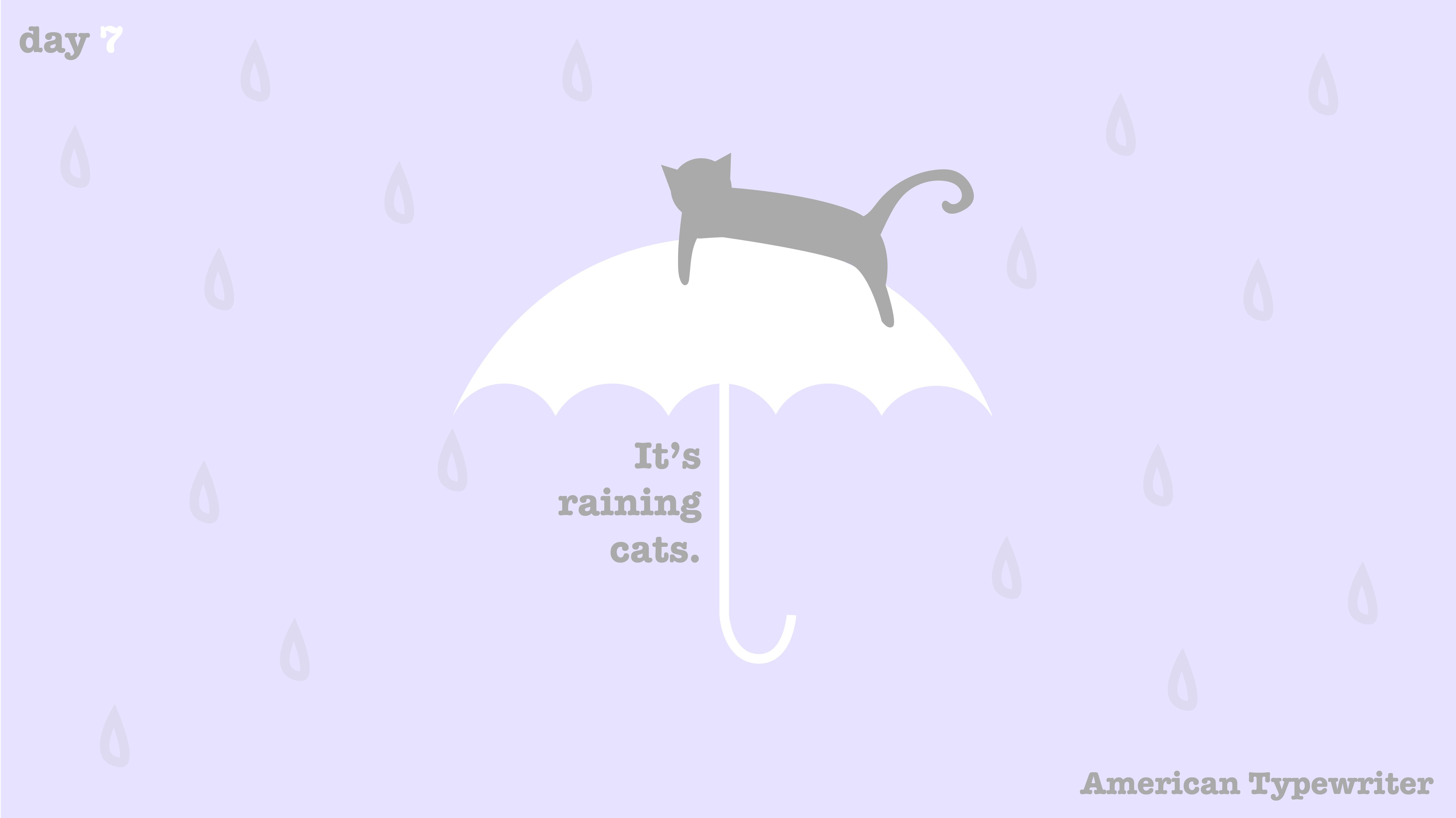 [cat]day1-07