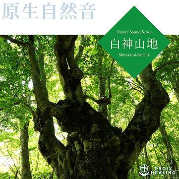原生自然音-白神山地.jpg