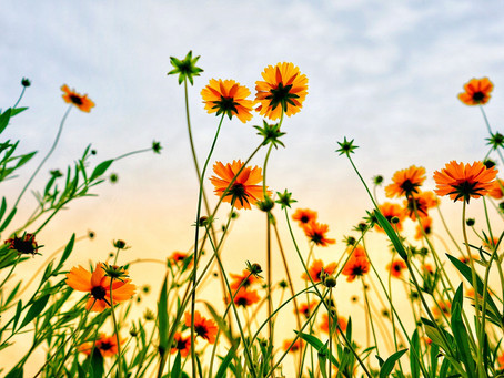 コラム:残暑が続く中、一足先に心地よい音楽で秋を感じるヒーリング作品をご紹介♪