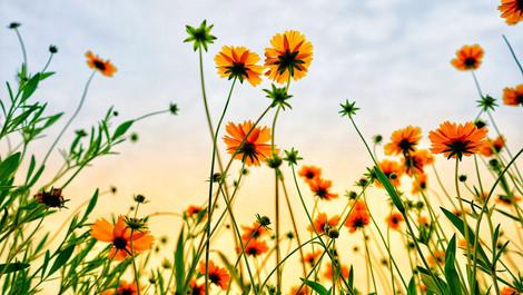 残暑が続く中、一足先に心地よい音楽で秋を感じるヒーリング作品をご紹介♪