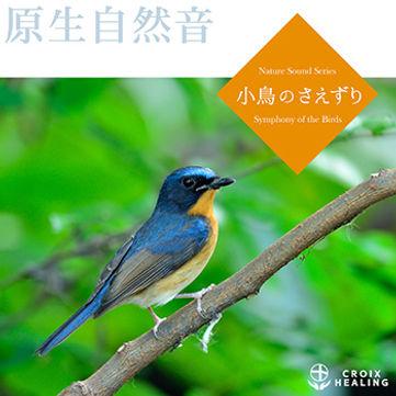 小鳥のさえずり 〜原生自然音でリラックス、瞑想、快眠、ヒーリングマッサージ、ヨガ〜
