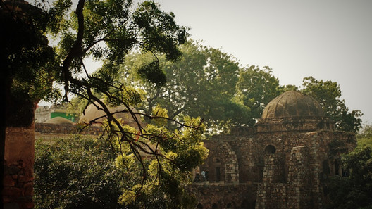 The Reign of What Remains: The Evolution of Love and Life in Delhi's Ruins