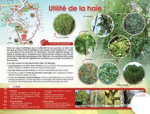 utilite_de_la_haie.jpg