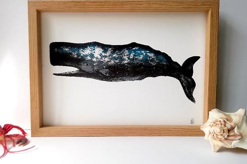 Unframed A4 Sperm Whale Giclée Print