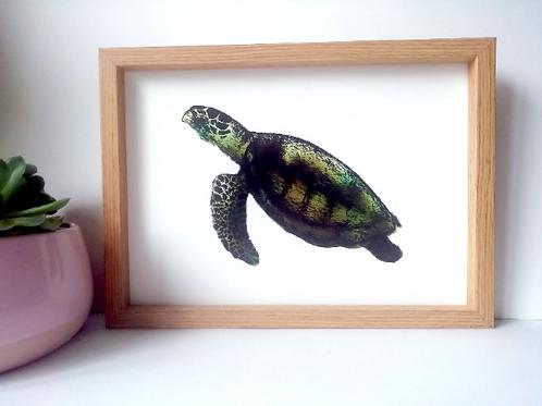 Unframed A4 Sea Turtle Giclée Print
