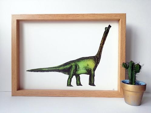 Unframed A4 Brontosaurus Giclée Print