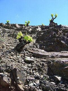 vall-llach-vineyards.jpg