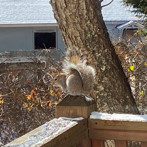 Merry Xmas from squirrel
